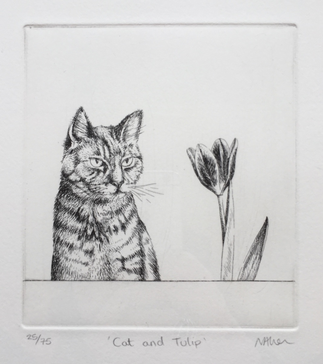 Neisha Allen ARUA, Cat and Tulip, etching, 12.5 x 11.5 cm
